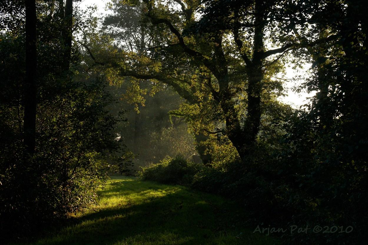 Rand van het bos met oude bomen die een sfeer geven alsof je